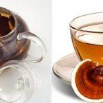 Trà nấm lim xanh chữa bệnh thế nào? Cách sử dụng trà nấm lim xanh